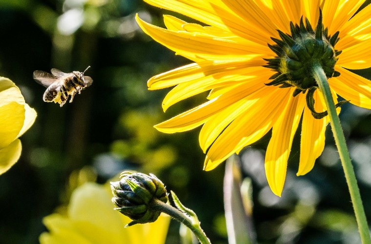 What Rejection, Bee Stings & Not Showing Up Have in Common